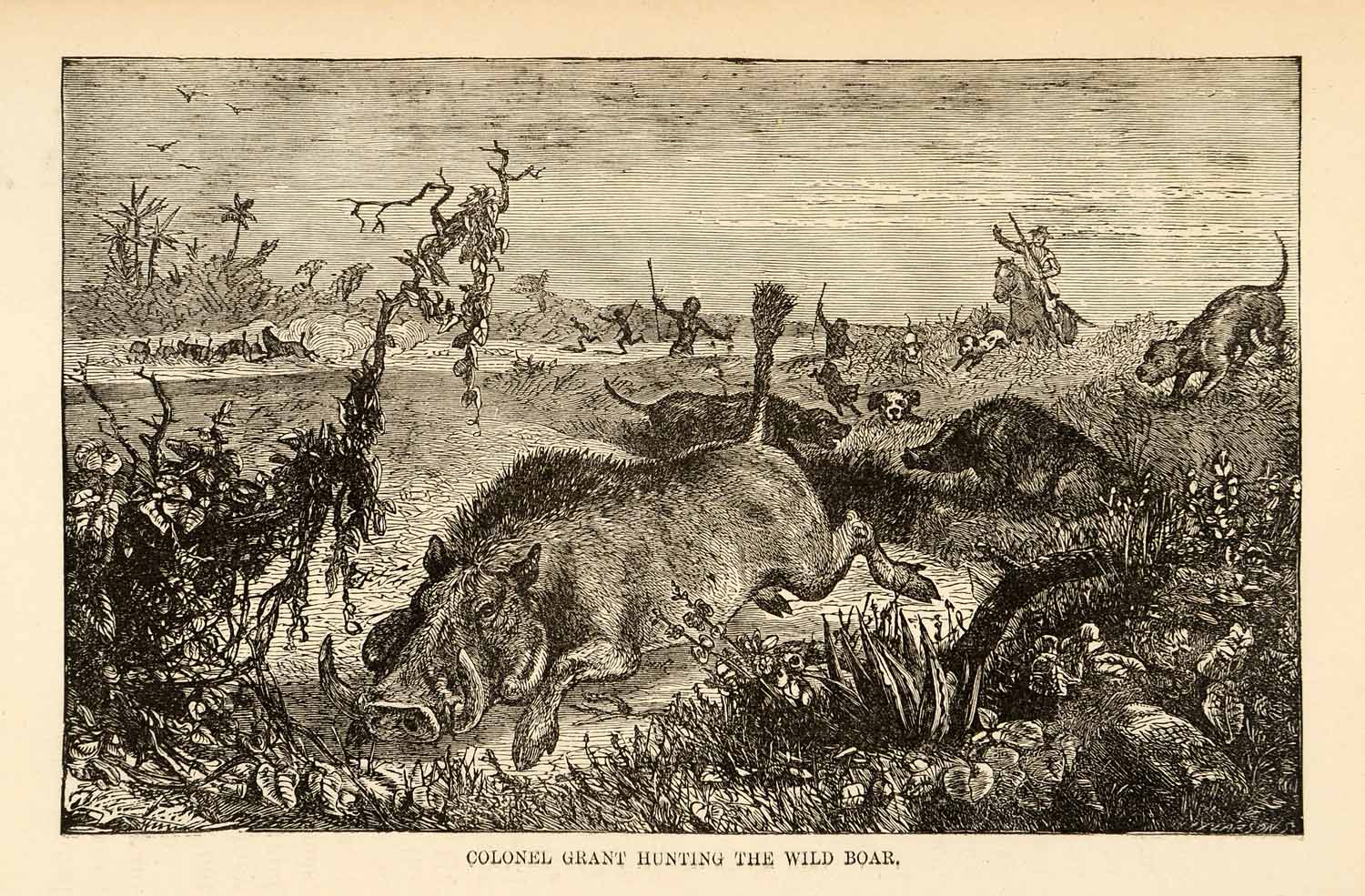 Engraving Wild Boar Hunting Guns Ulysses Grant Dogs Spear India Horse